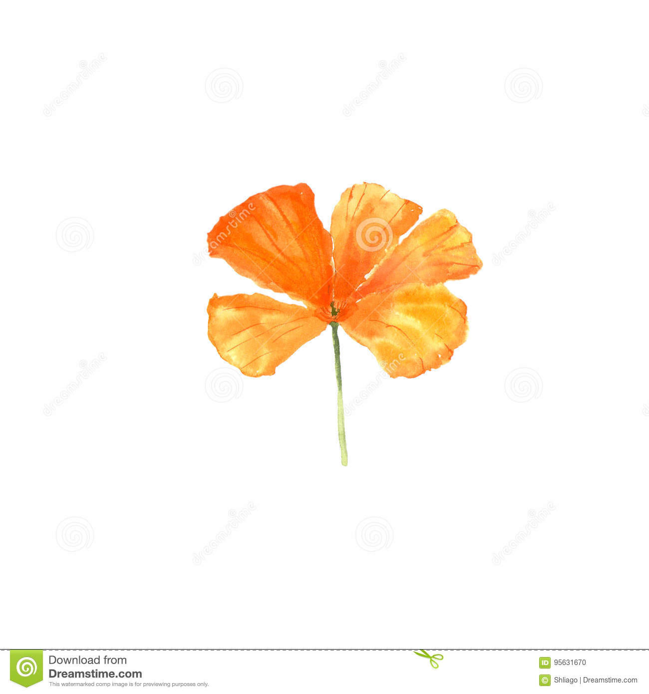 Download Watercolor Botanical Illustration Of California Poppy Flower Isolated On White Background Stock