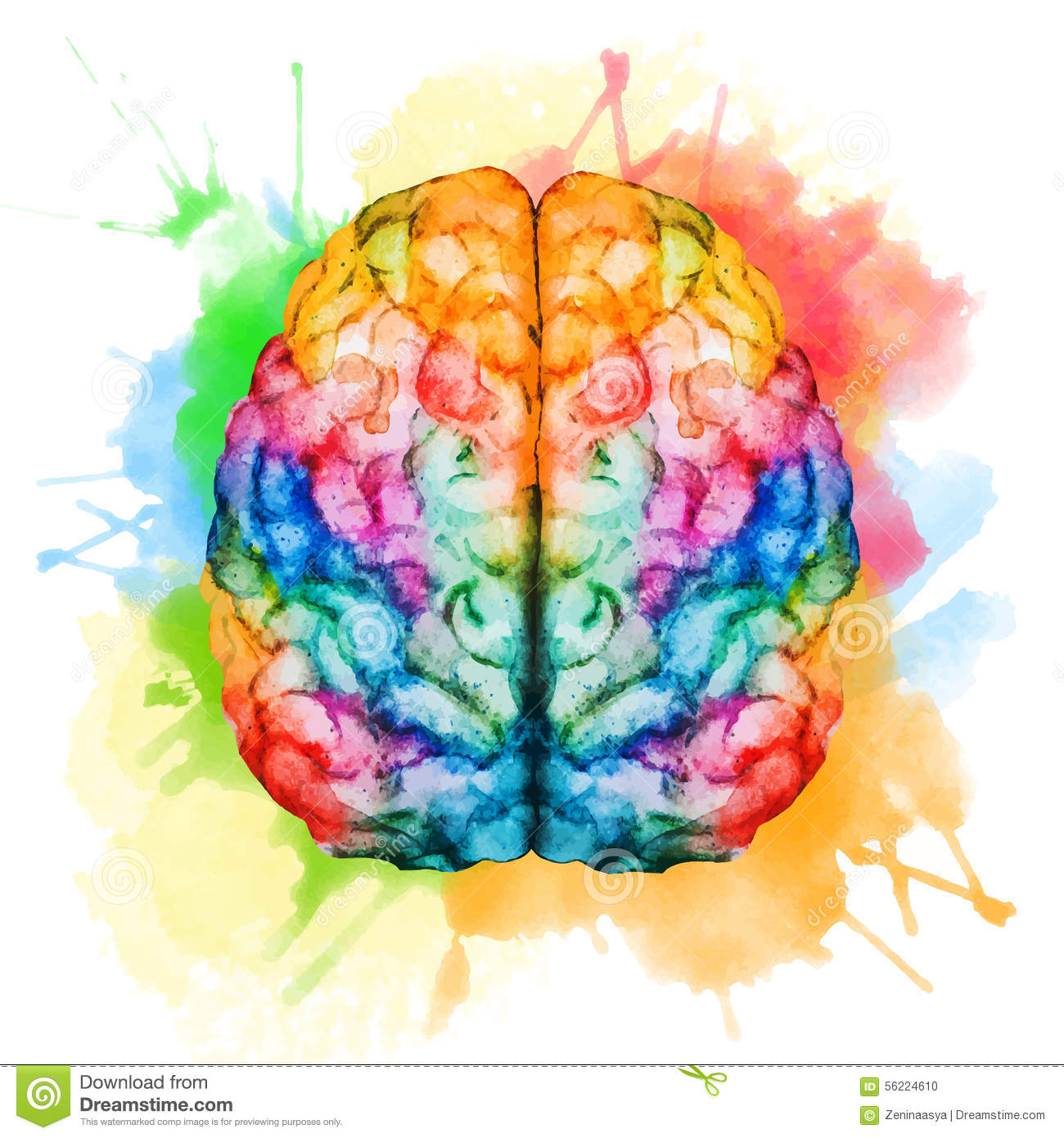 watercolor brain beautiful vector image nice 56224610