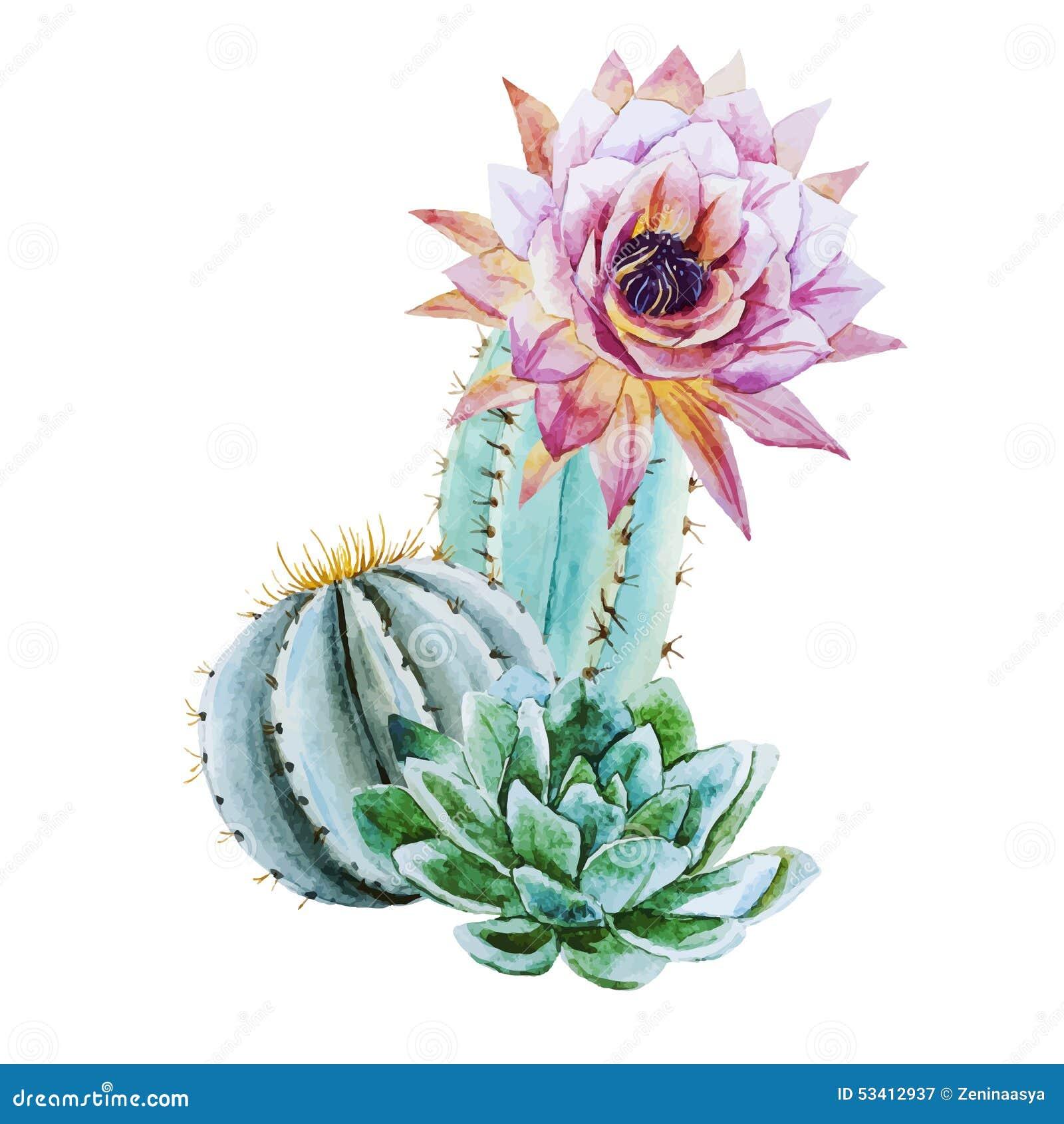 Watercolor Cactus Stock Vector Image 53412937