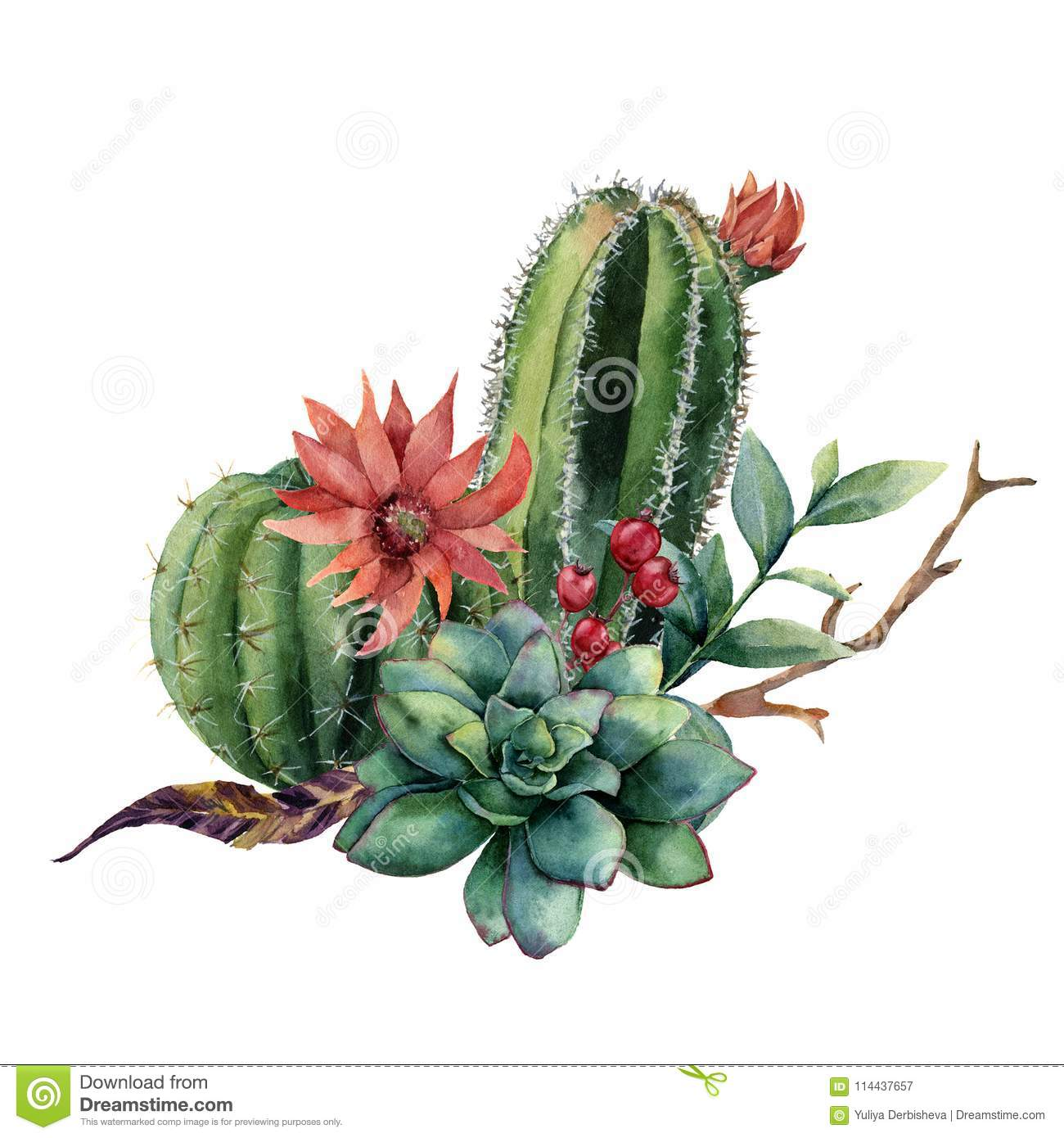 Watercolor Cactus Bouquet Hand Painted Cereus With Red Flower Green Succulent Berries And Treebranch With Leaves Stock Illustration Illustration Of Blossom Decoration 114437657