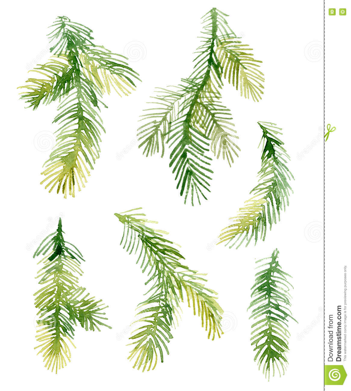 Watercolor christmas fir needle tree branches stock - White painted tree branches ...