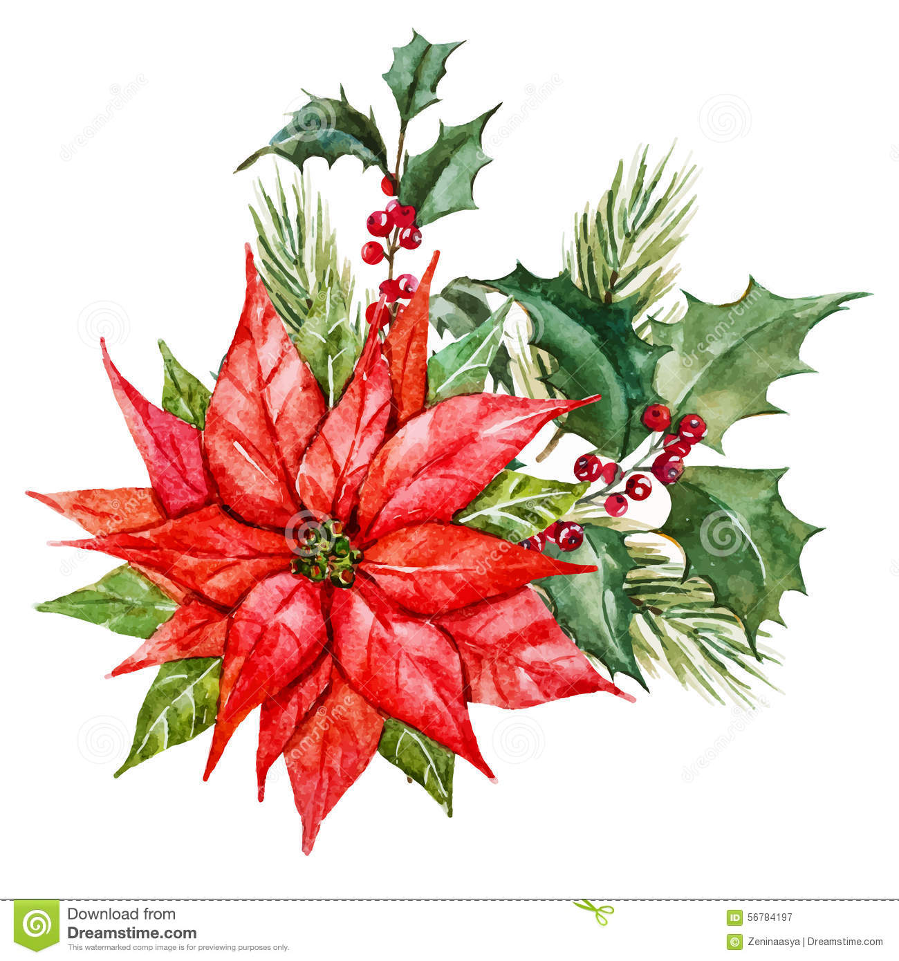 watercolor christmas flowers stock vector  image, Beautiful flower