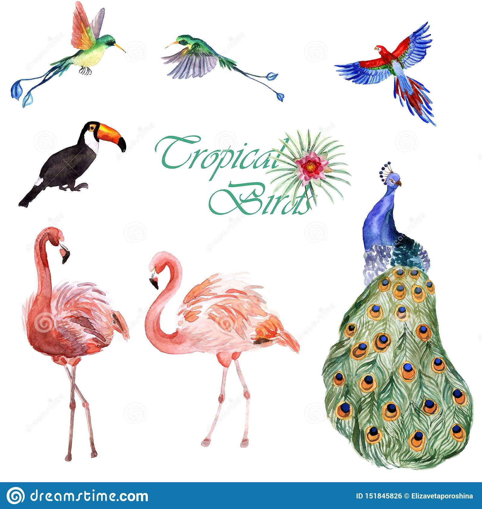 Watercolor collection of tropical birds isolated on a white background