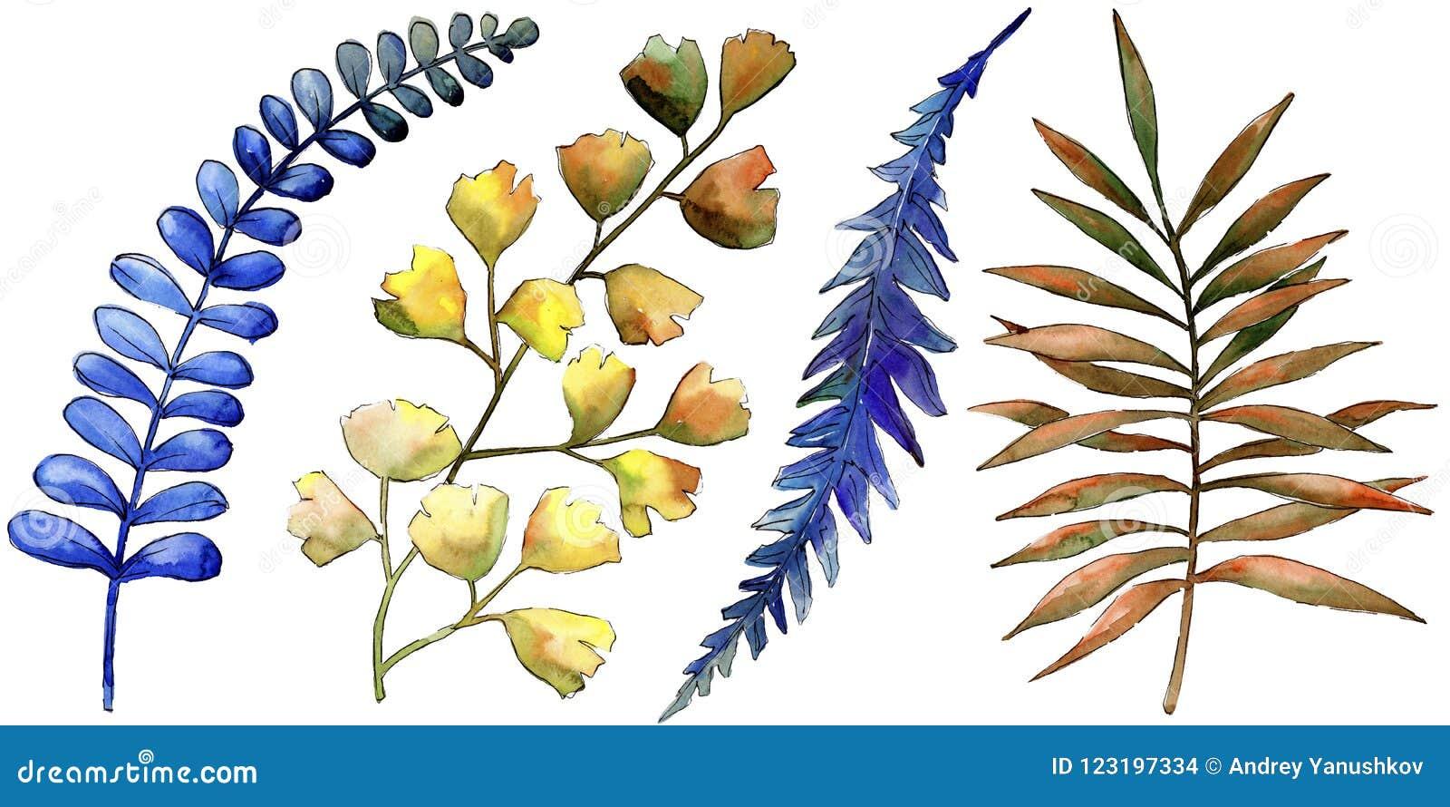 Watercolor Colorful Brake Plants Leaf Plant Botanical Garden Floral