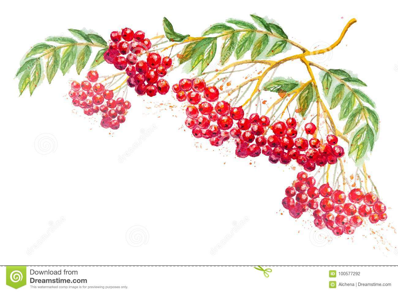 Watercolor composition with rowanberry branch