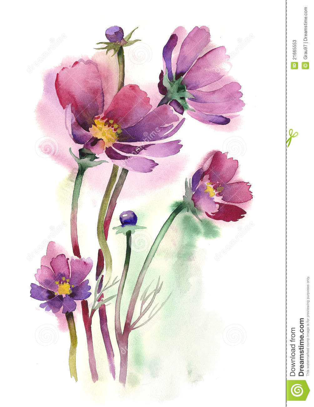 Watercolor cosmos flowers stock illustration for Watercolor flower images