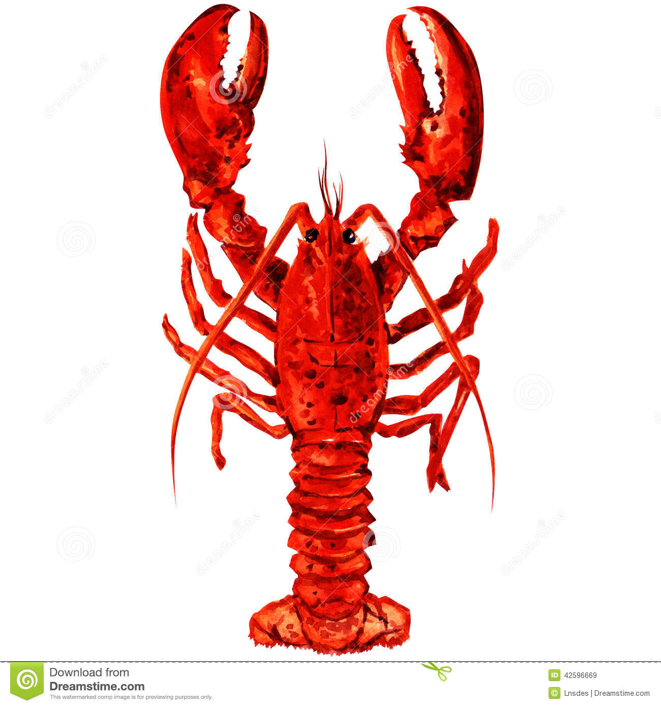Watercolor Crayfish. Stock Illustration - Image: 42596669
