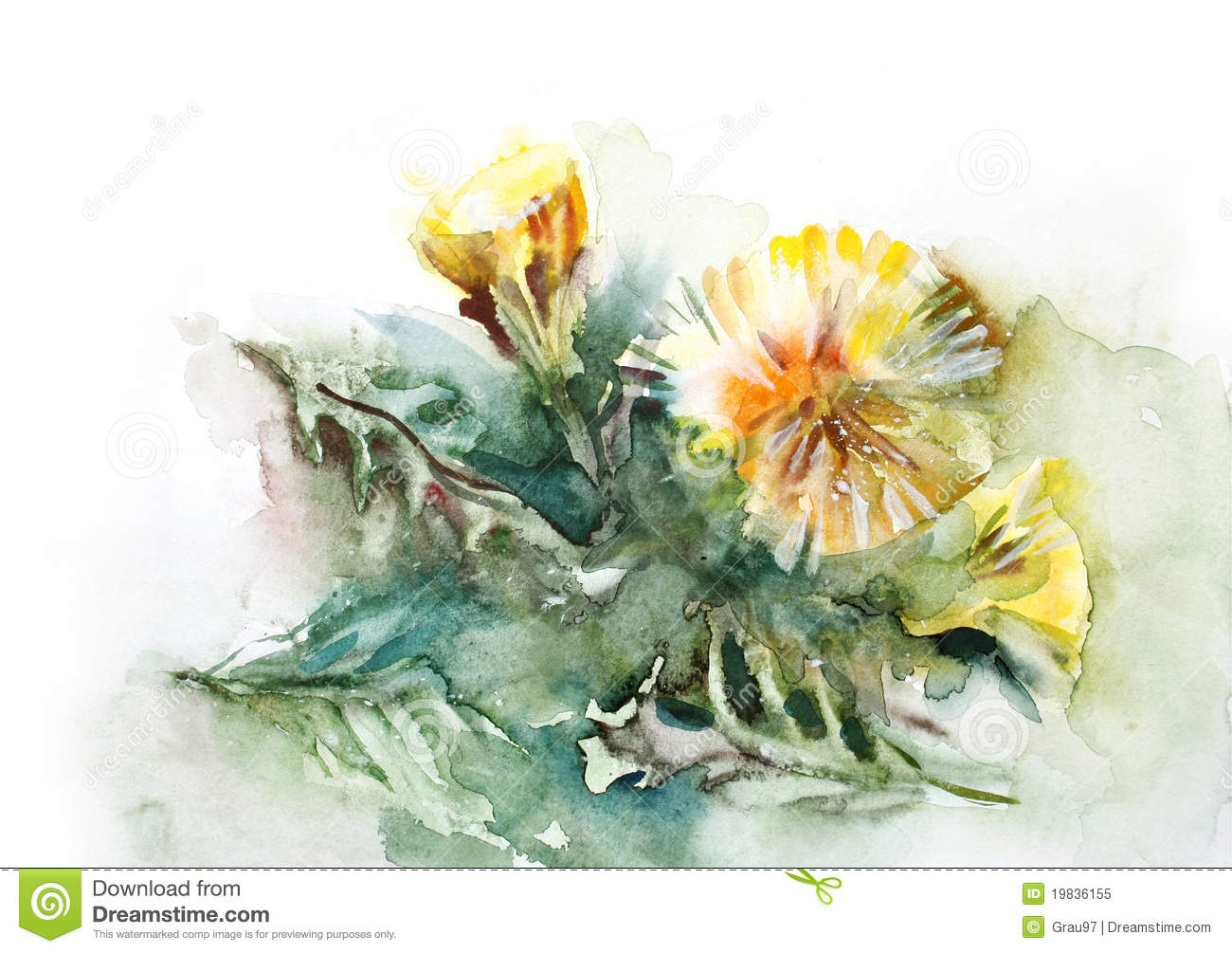Watercolor Dandelion Royalty Free Stock Photo Image
