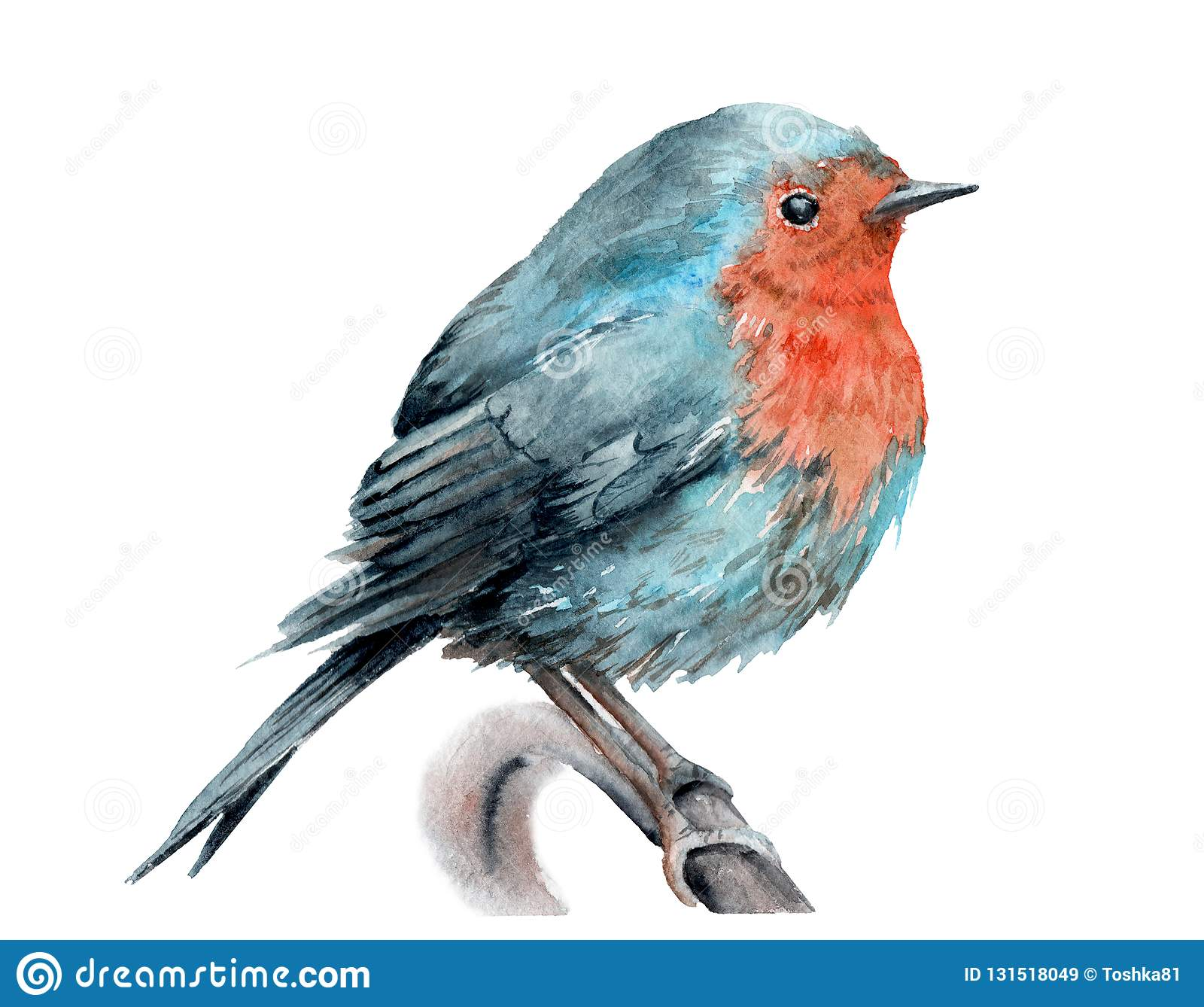 Watercolor drawing of a bird. robin on a branch