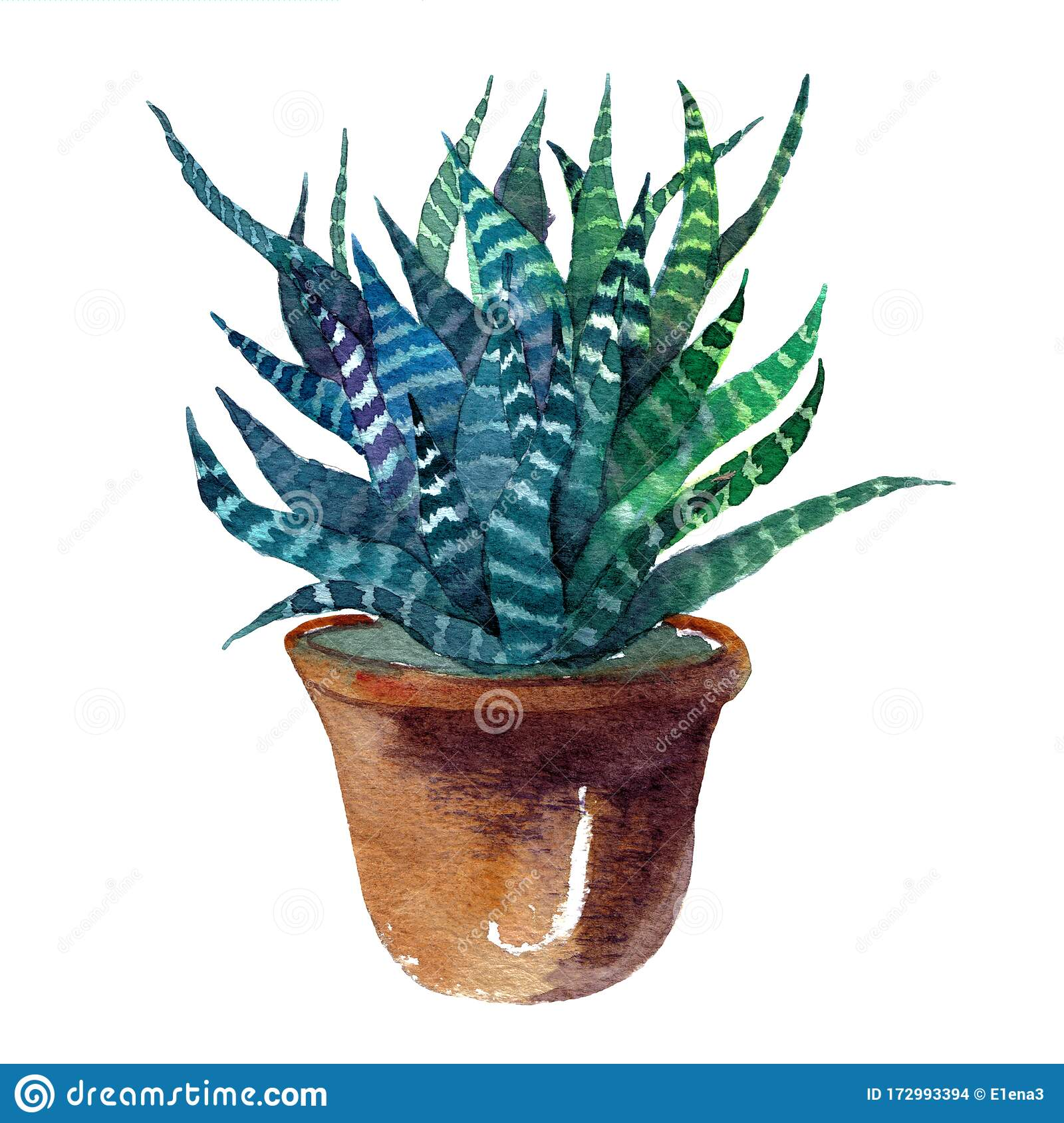 Watercolor Drawing Of A Cactus Succulents In Pots In The Scandinavian Style Stock Illustration Illustration Of Cactus Coloured 172993394
