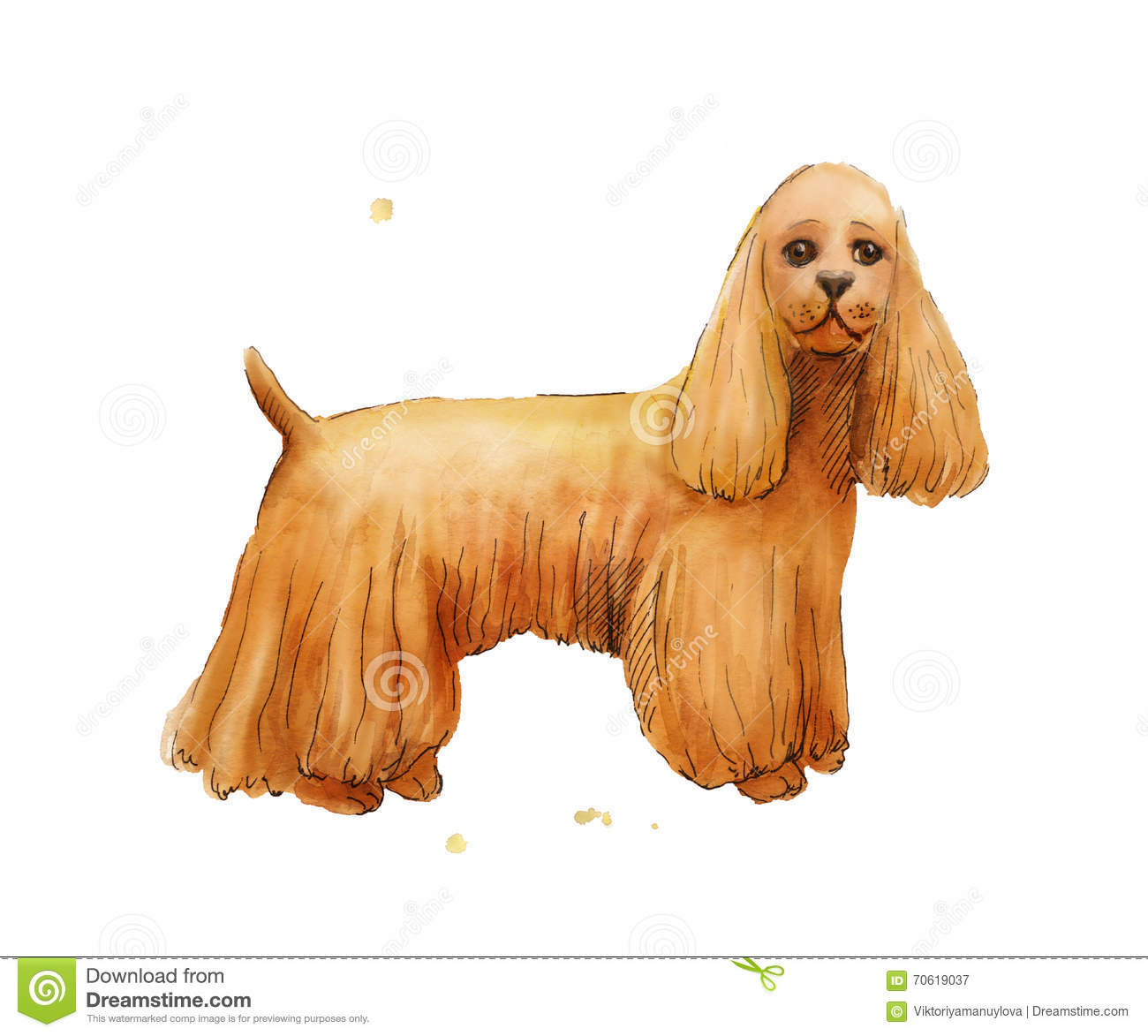 Watercolor Drawing Of Cokcer Spaniel Brown Cute Dog Stock Illustration Illustration Of Brown Puppy 70619037