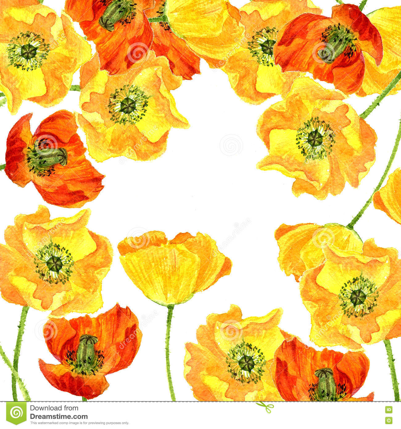 Watercolor Drawing Flowers Of Yellow Poppies Stock ...