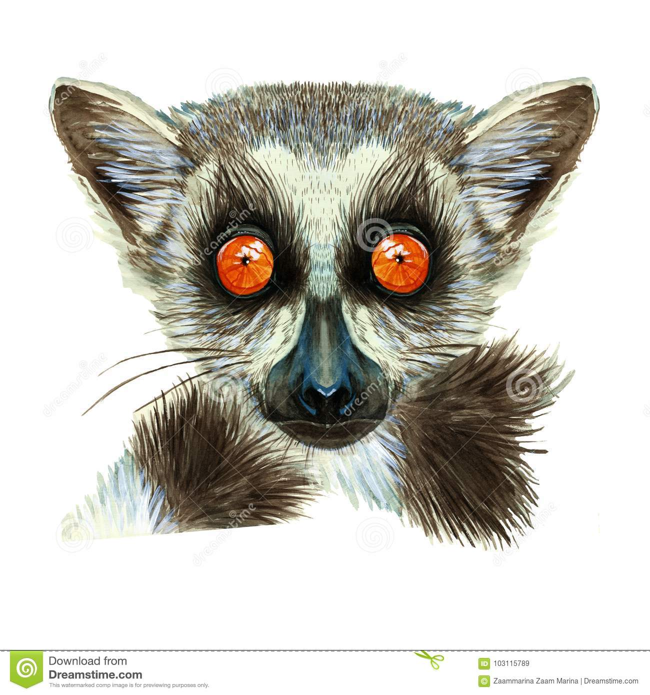 Watercolor drawing of mammal animal of lemur with large orange eyes with hair and tail, portrait of lemur, on white background fo