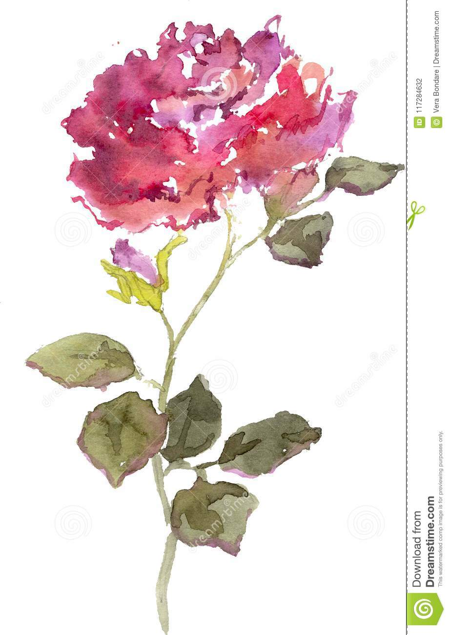 Watercolor Drawing Of A Red Rose Bud Stock Photo Illustration Of