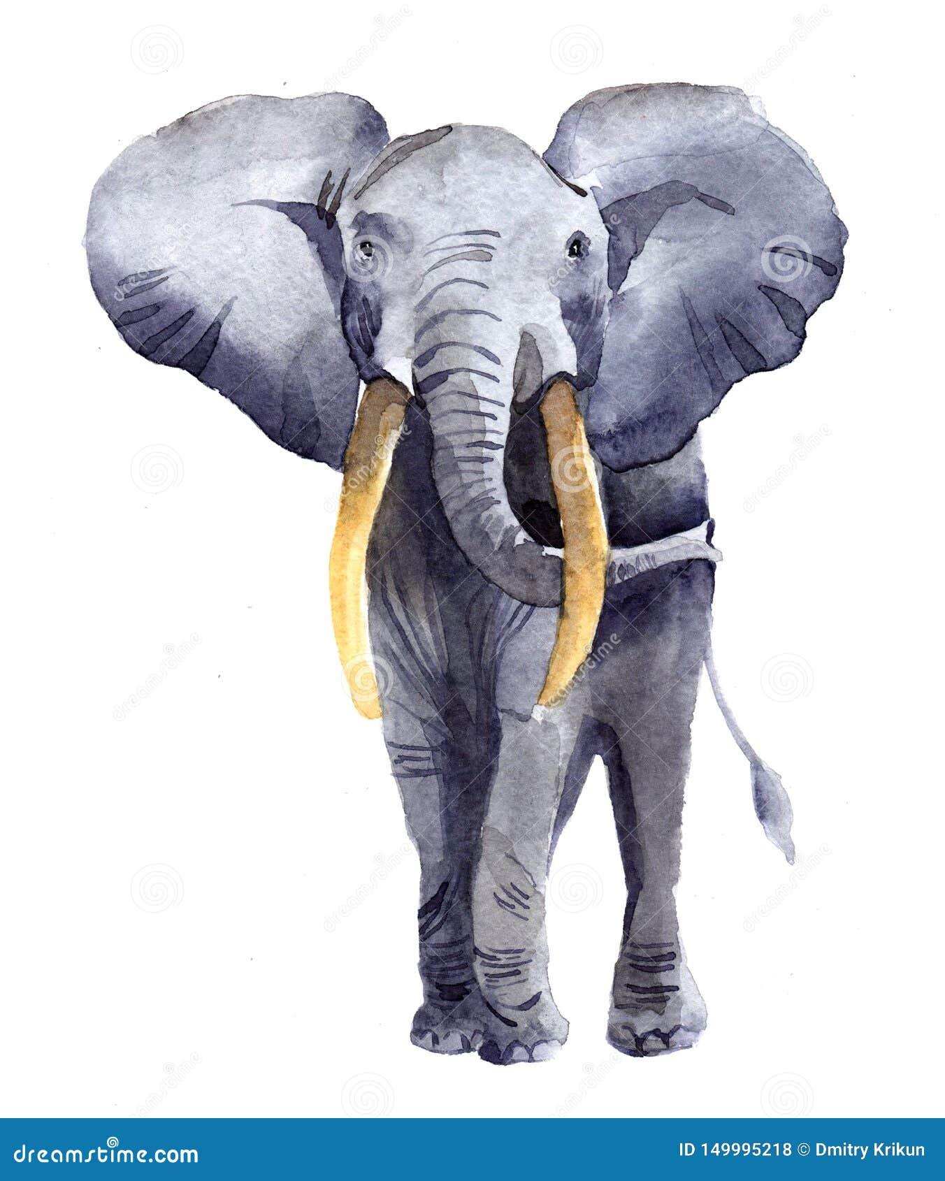 Watercolor Elephant Animal Illustration Isolated Stock Illustration Illustration Of Hand Drawing 149995218
