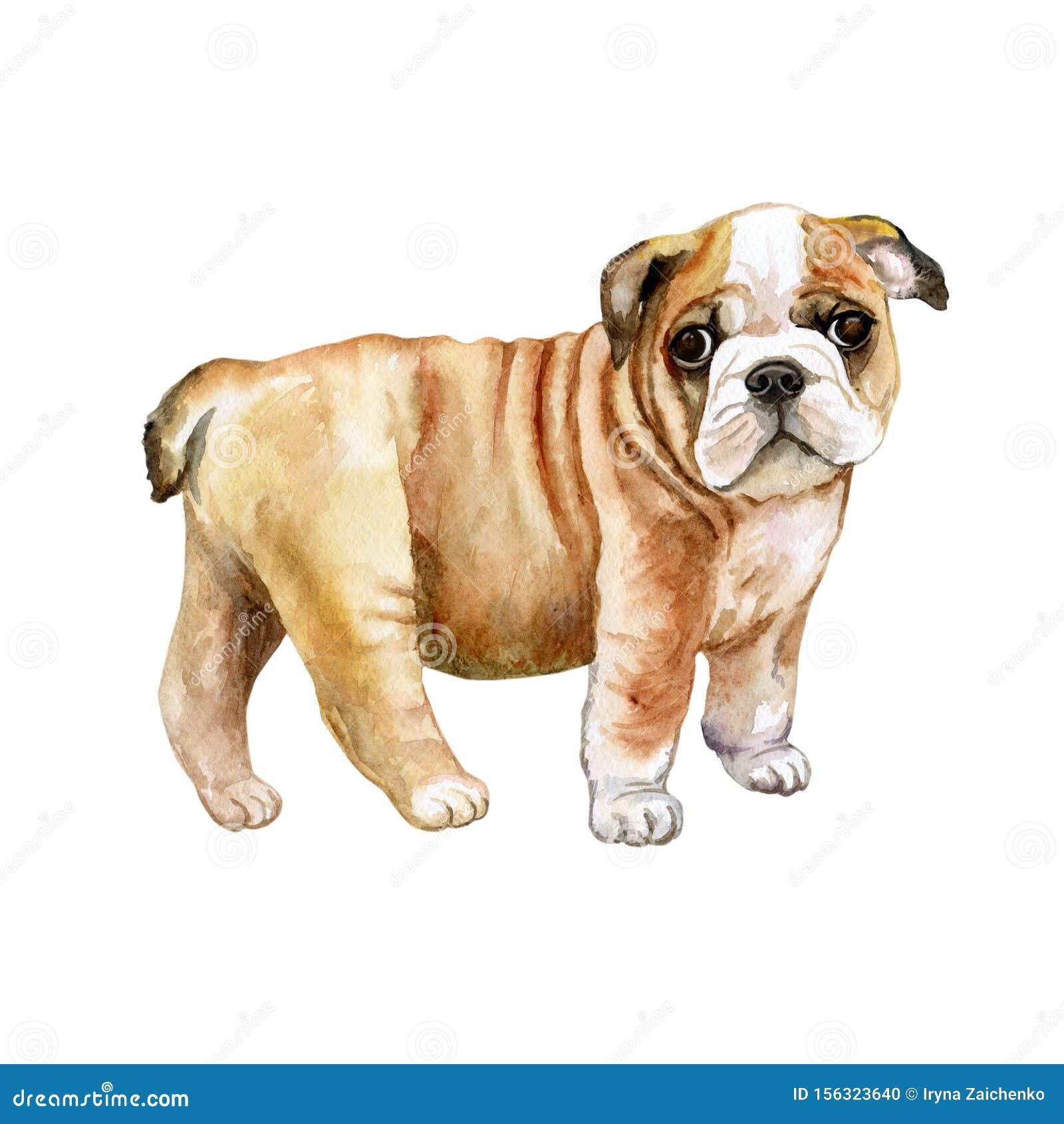 Watercolor English Bulldog Puppy Painting Stock Illustration Illustration Of Card Breed 156323640