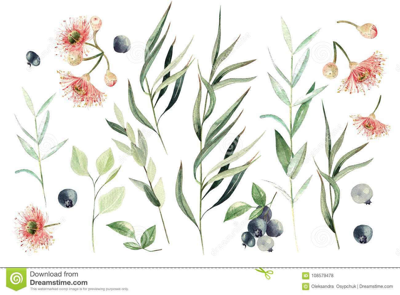 Watercolor eucalyptus set. Hand painted eucalyptus elements and berry. Floral illustration isolated on white background.