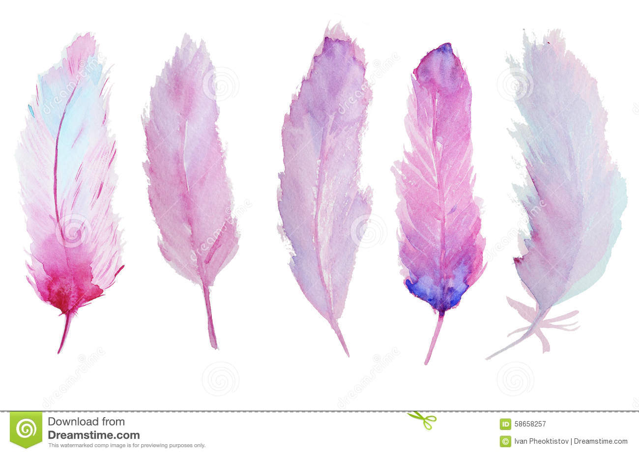 Hanging Prints Watercolor Feathers Stock Illustration Image 58658257