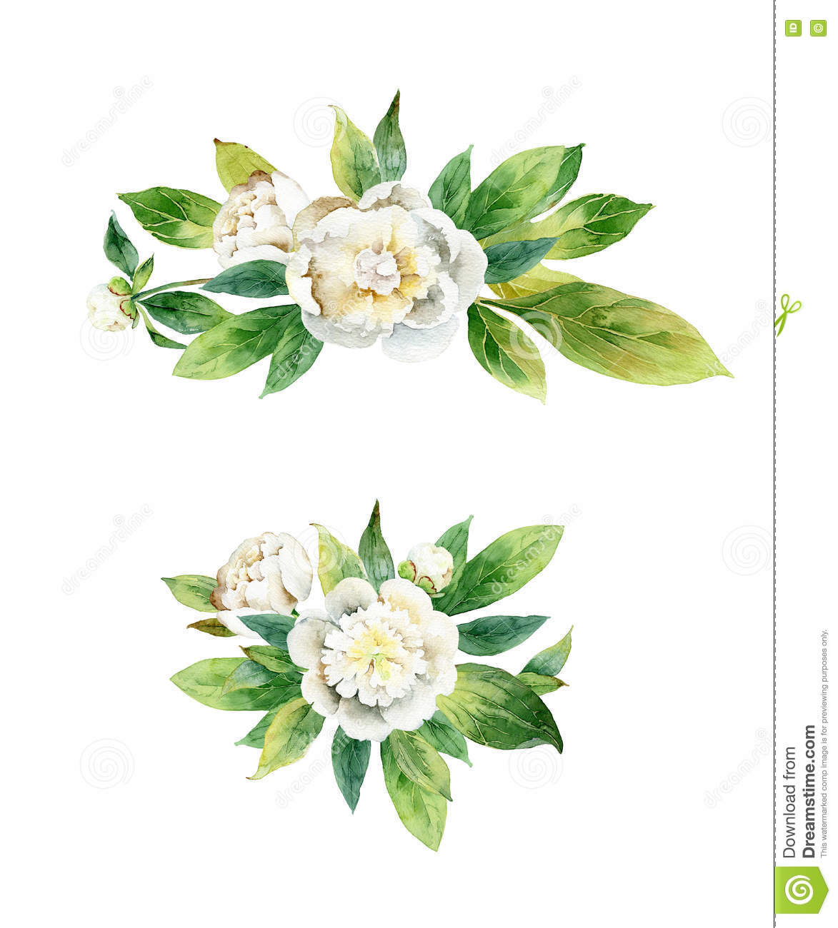 how to draw peony leaves