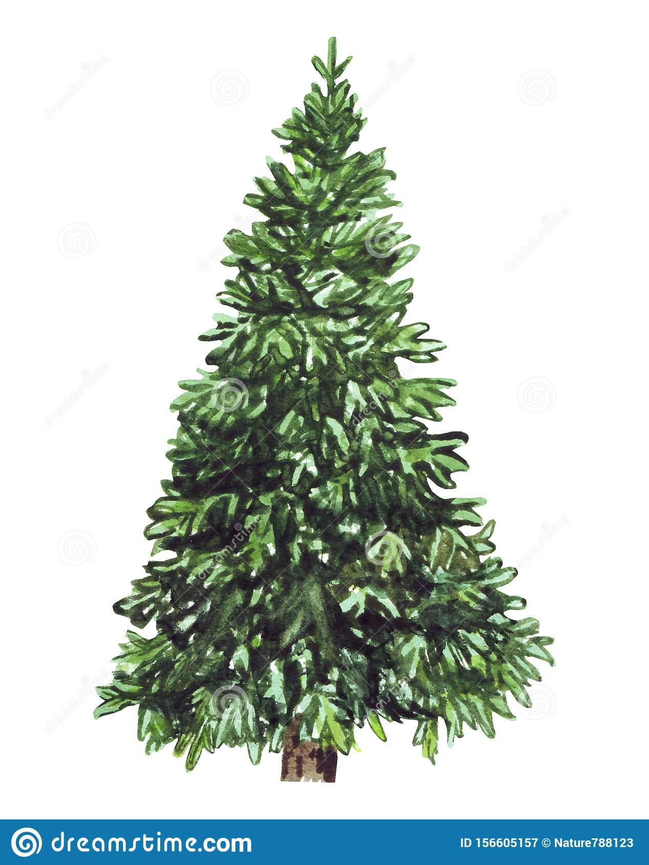 Watercolor green Christmas tree on white background. Isolated hand drawn elements for prints, cards