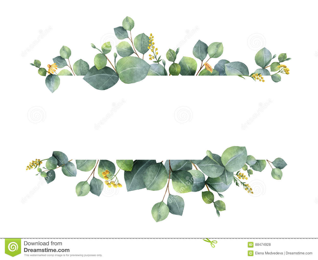 Watercolor green floral banner with silver dollar eucalyptus leaves and branches isolated on white background.