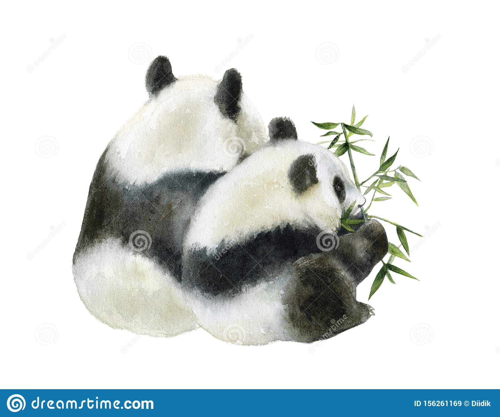 Panda bear watercolor hand draw illustration isolated on white background.