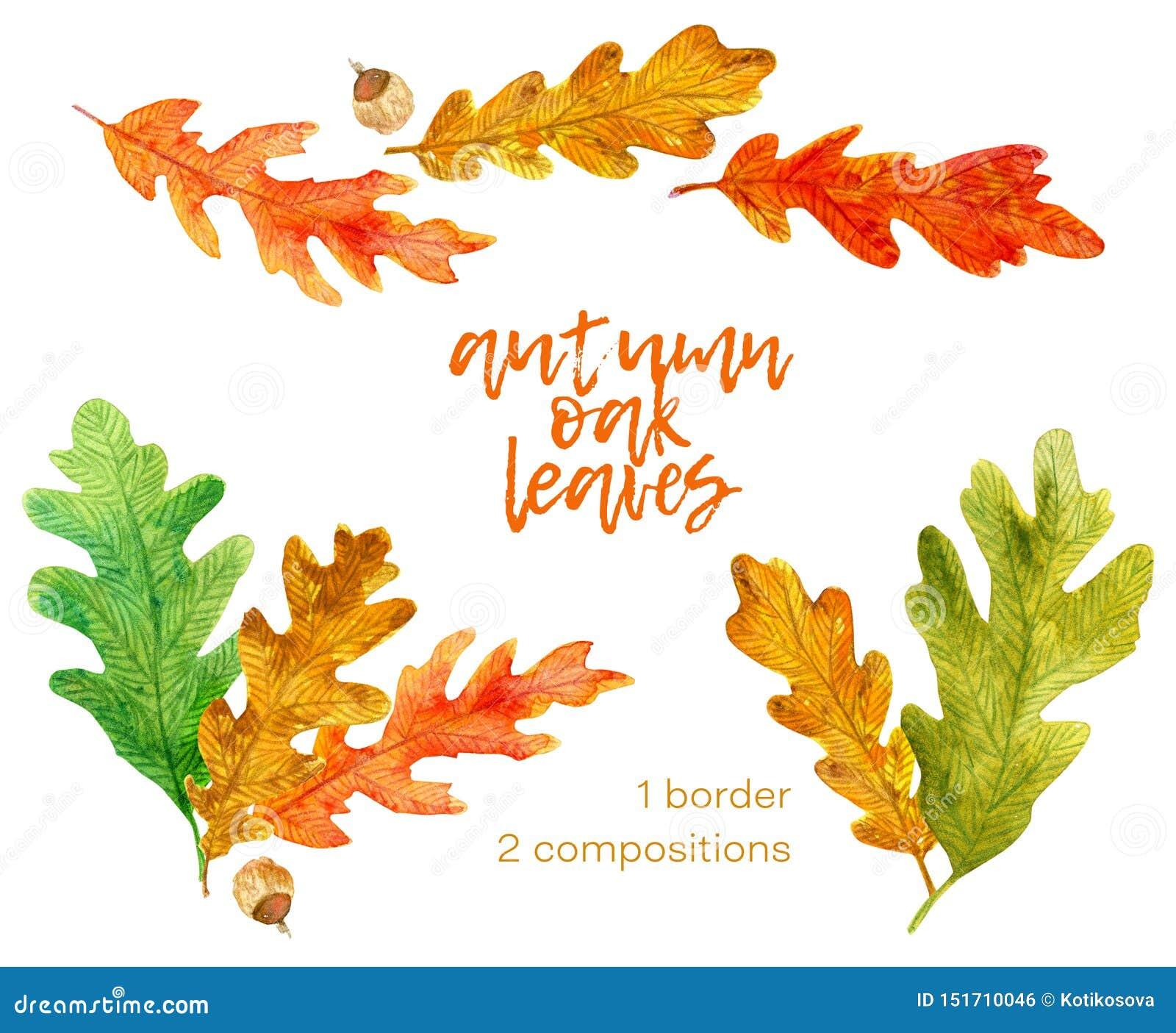 Set of hand drawn watercolor autumn oak leaves elements