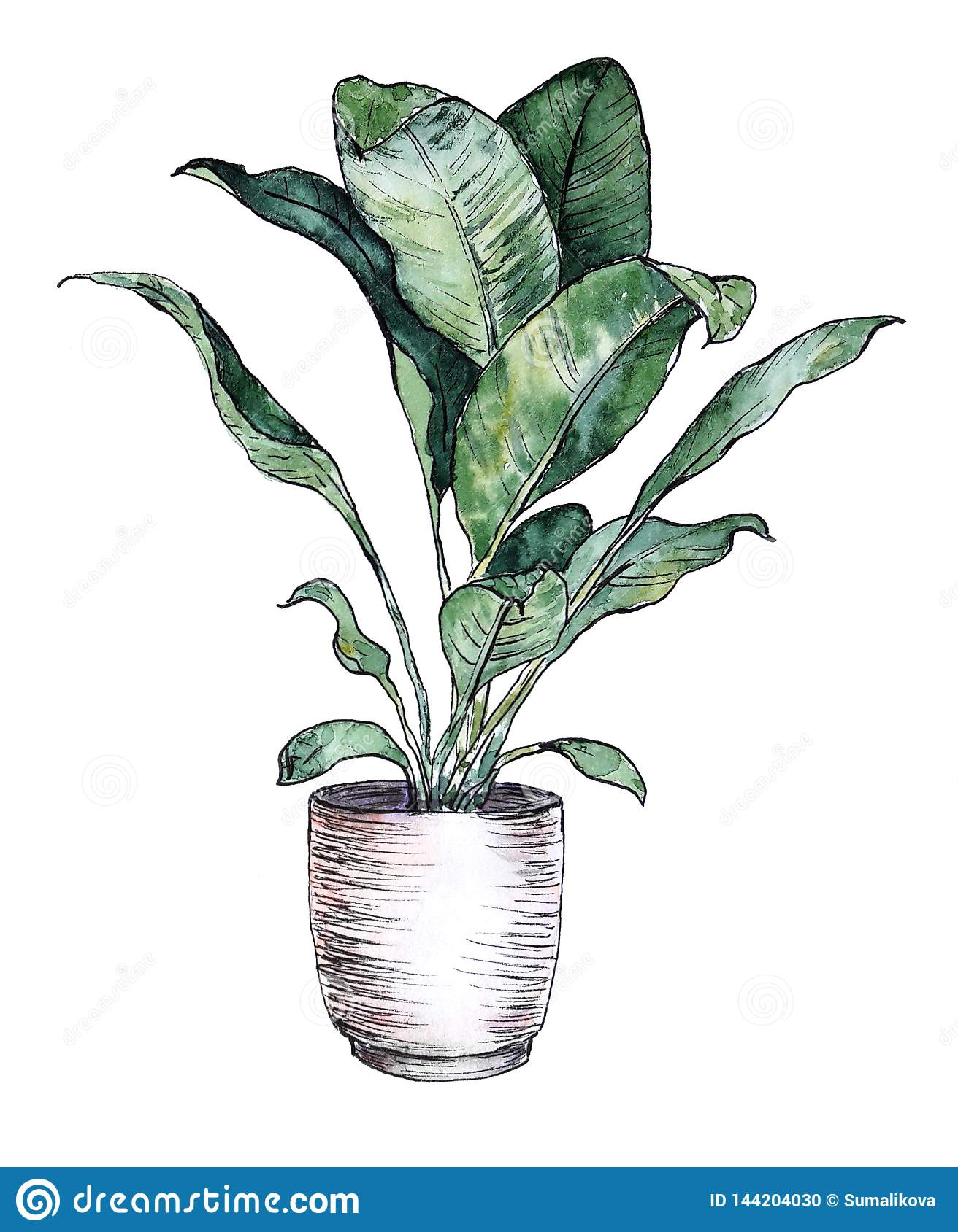 Watercolor Hand Painted Indoor Plant In Pot Stock Illustration Illustration Of Decoration Interior 144204030