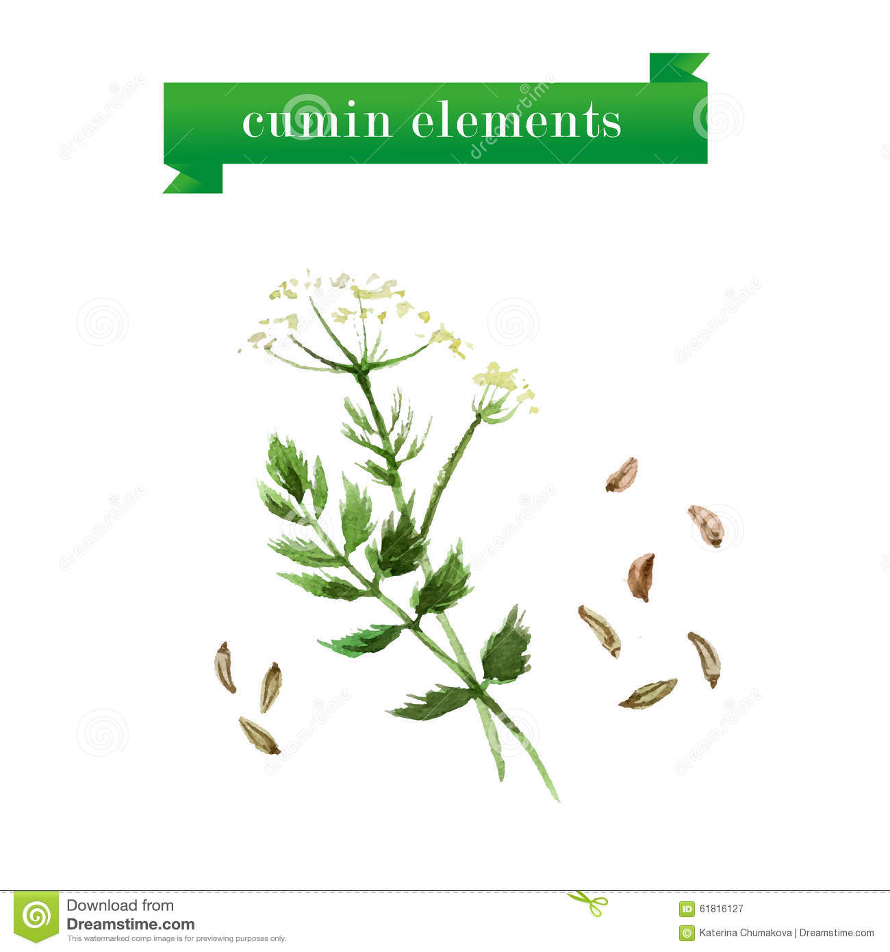 Watercolor Herbs Collection Of Cumin Stock Vector ...