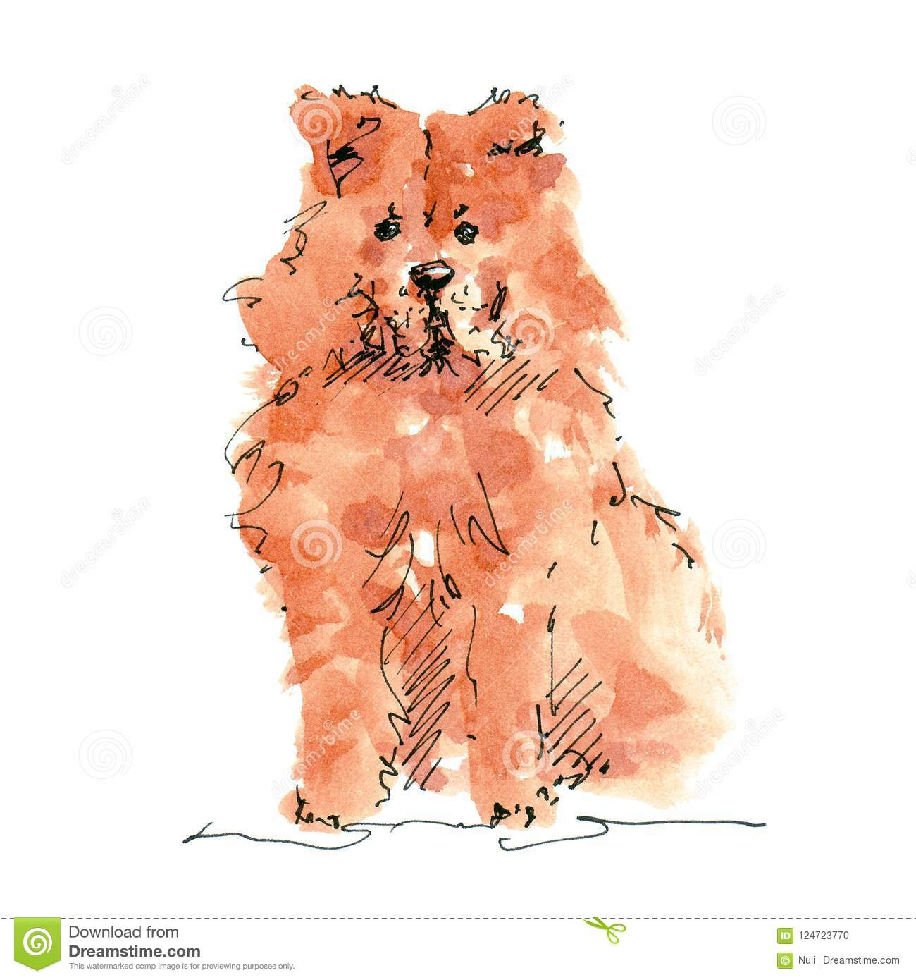 Watercolor Illustration Of Chow Chow Dog Drawing Isolated On White