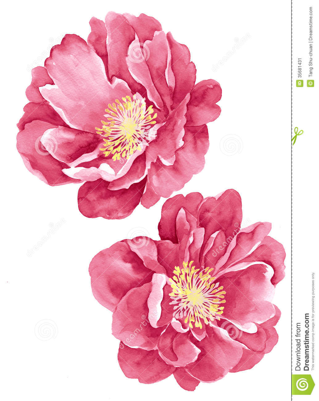 Simple Watercolor Flower Illustration Stock Image