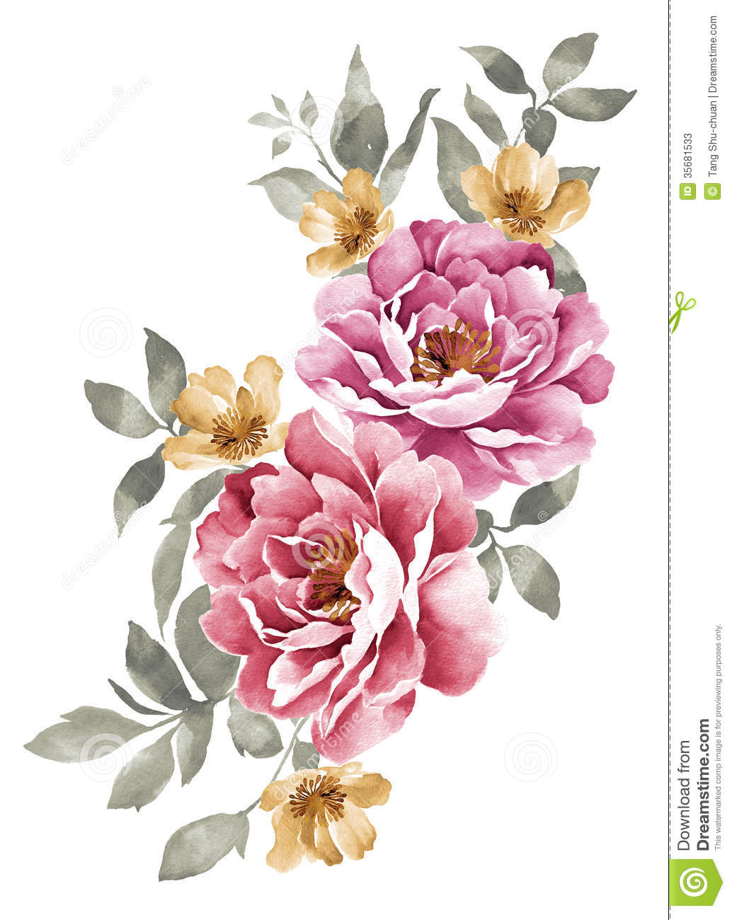 Watercolor Illustration Flower Stock Photos Image 35681533