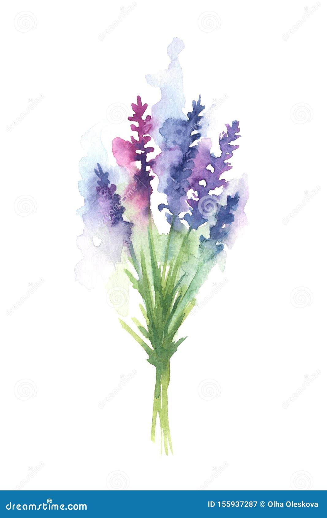 Watercolor Illustration Of Lavender Bouquet Stock Illustration Illustration Of Blue Herbal 155937287