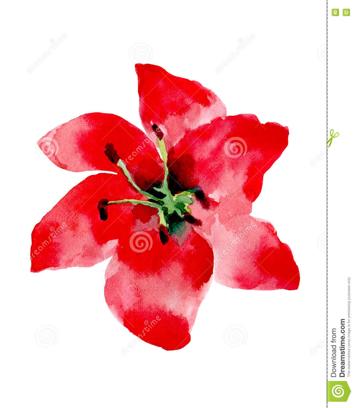 Watercolor Illustration Of A Red Flower On A White Background Stock