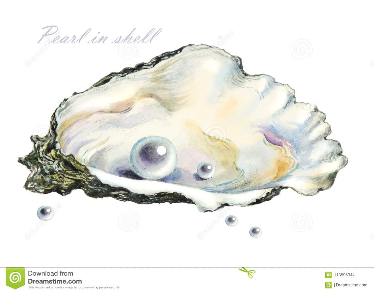 Several Of The Pearls In The Pearl Shell Stock Illustration
