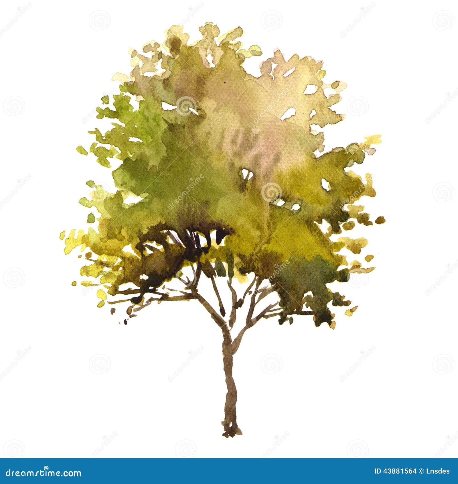 Lumiere Floor Plan Watercolor Illustration Tree Stock Illustration