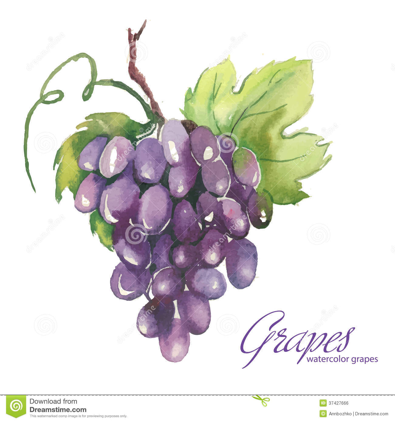 Watercolor Illustrations Of Grapes Royalty Free Stock