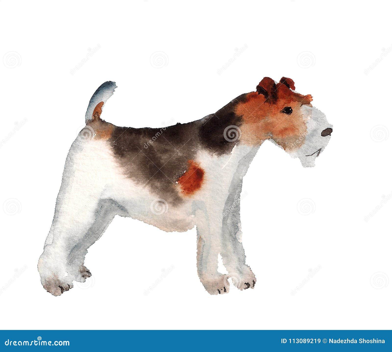 Watercolor fox terrier stock illustration. Illustration of image ...