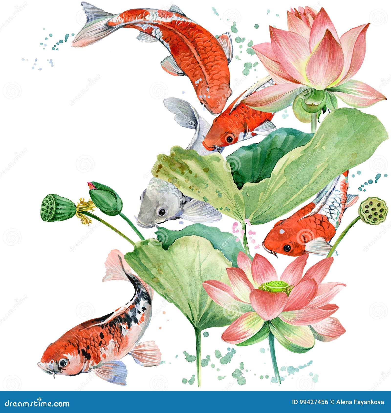 Watercolor Koi Carp And Lotus Flower Watercolor Fish Background