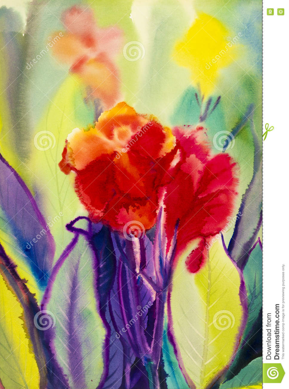 Watercolor Landscape Original Painting Colorful Of Canna Lily Flower