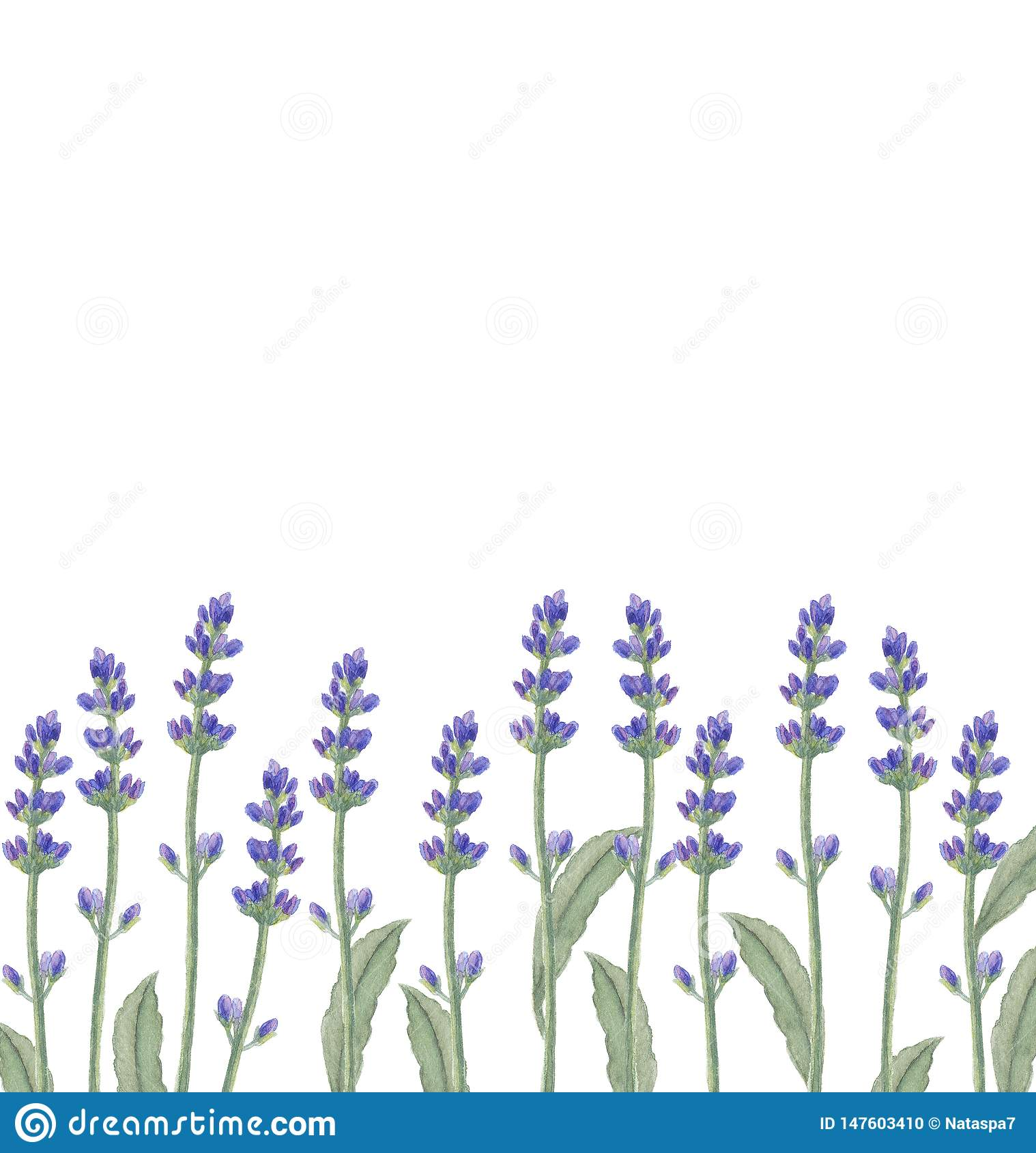 Watercolor illustration with lavender flowers.
