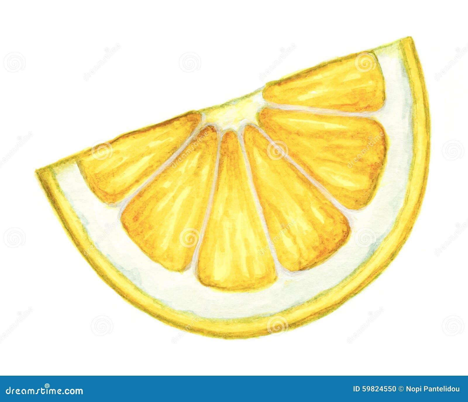 Watercolor Lemon Slice On White Background. Stock Illustration - Image ...