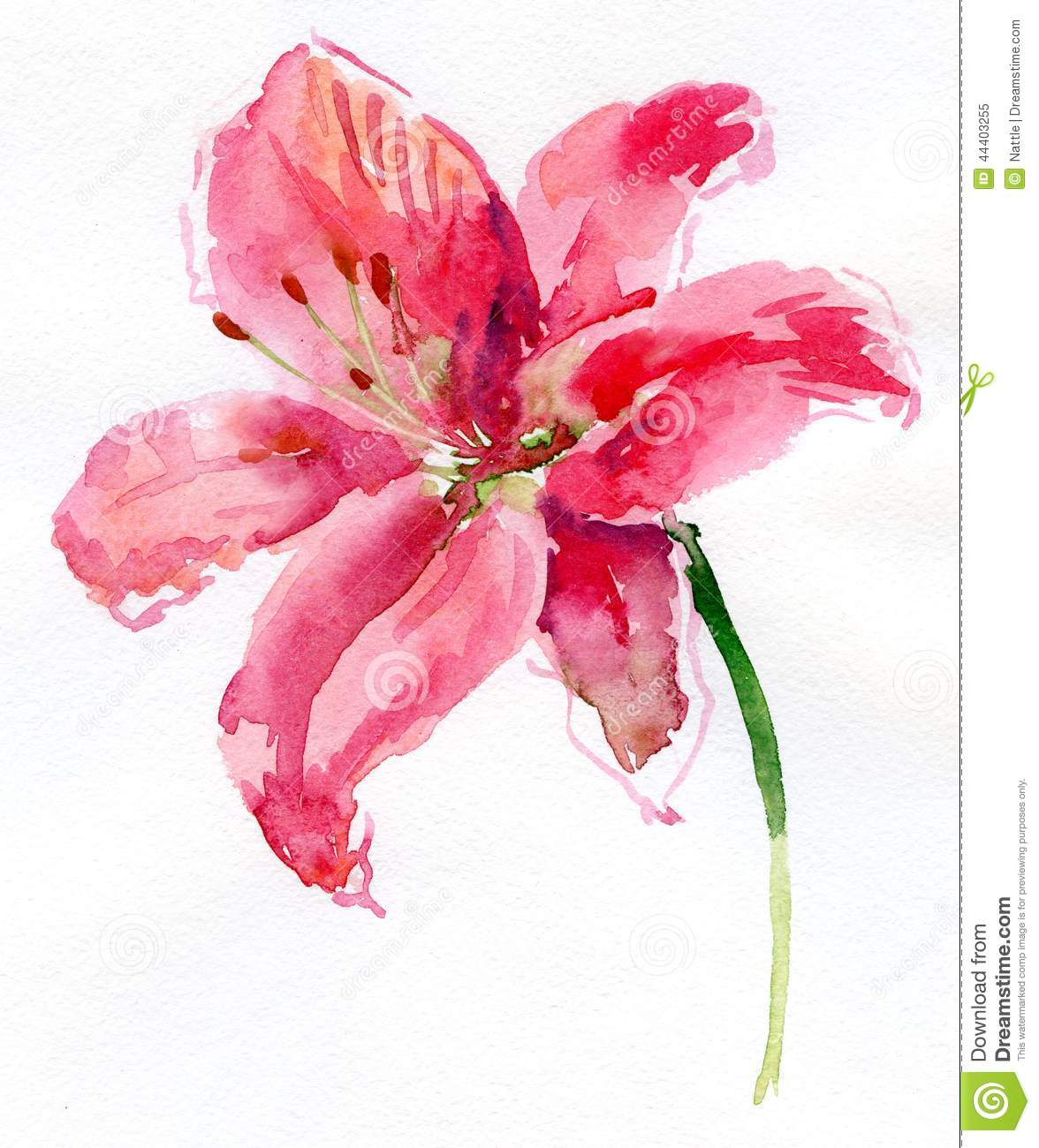 Pink lily flower transparent image the cliparts - Background Flower Isolated Lily