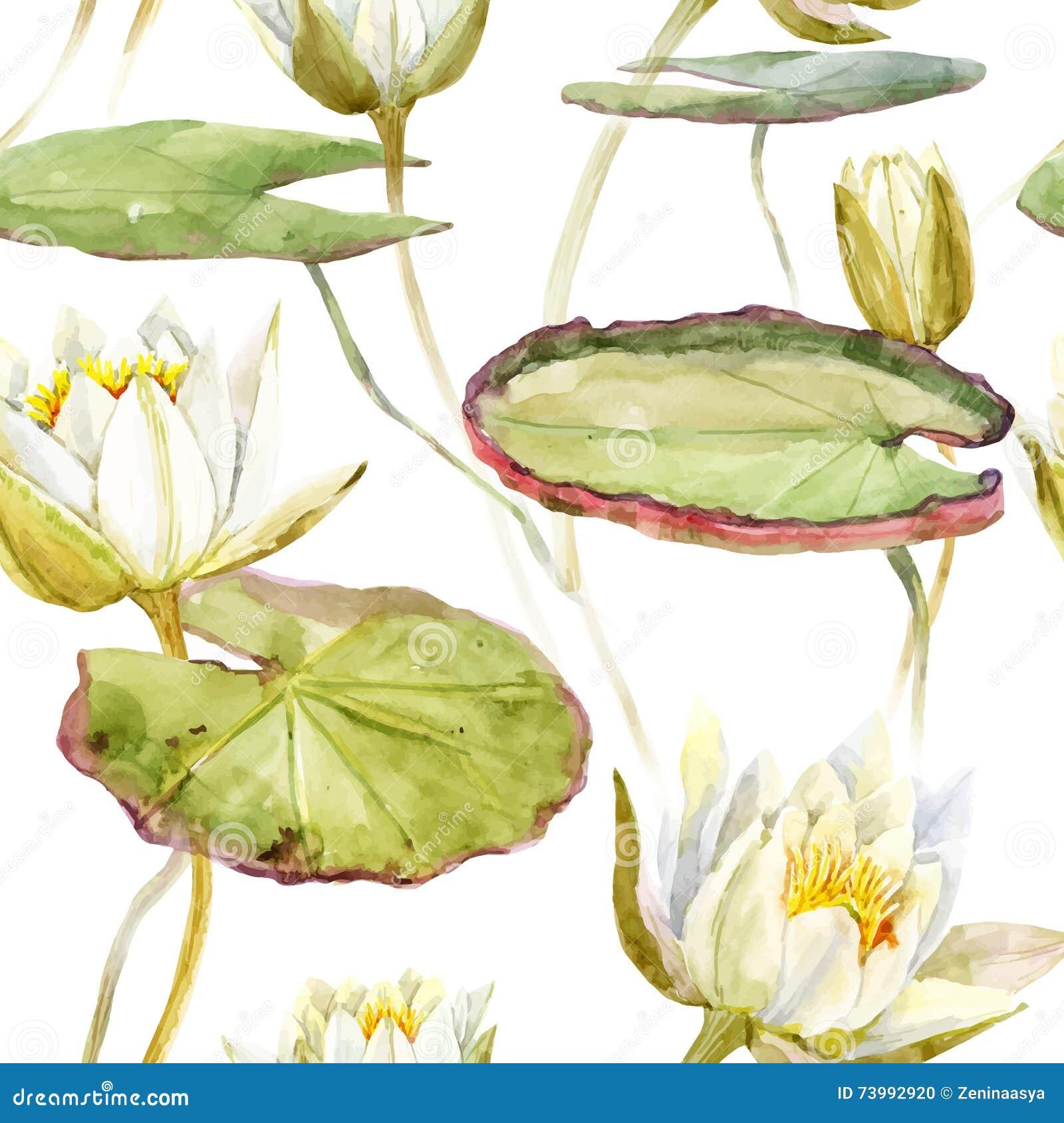 Watercolor Lotus Pattern Stock Vector Illustration Of Beautiful