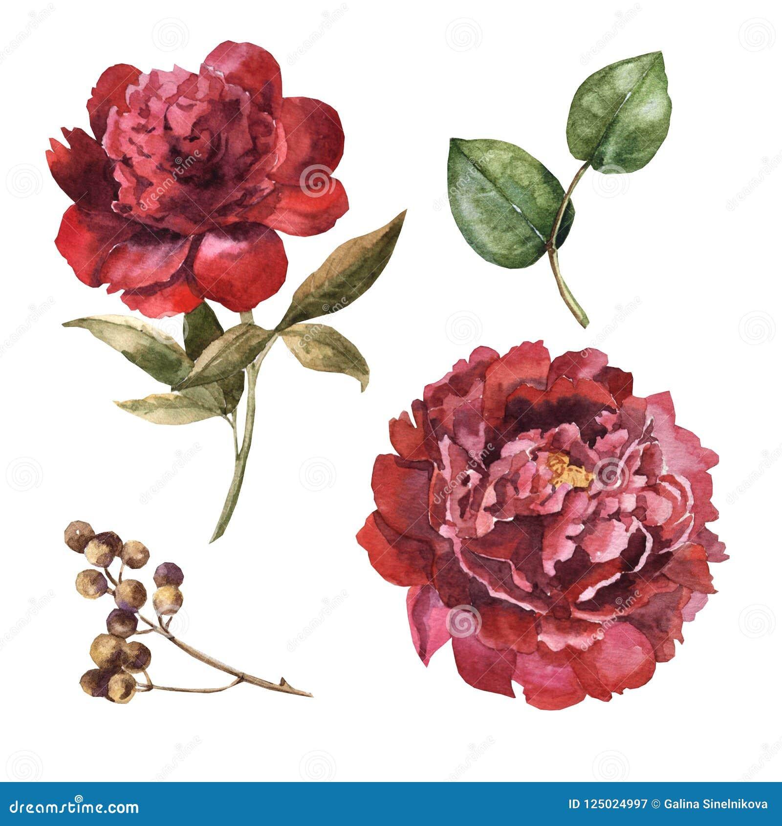 Watercolor Maroon Flower Set Stock Illustration - Illustration of ...