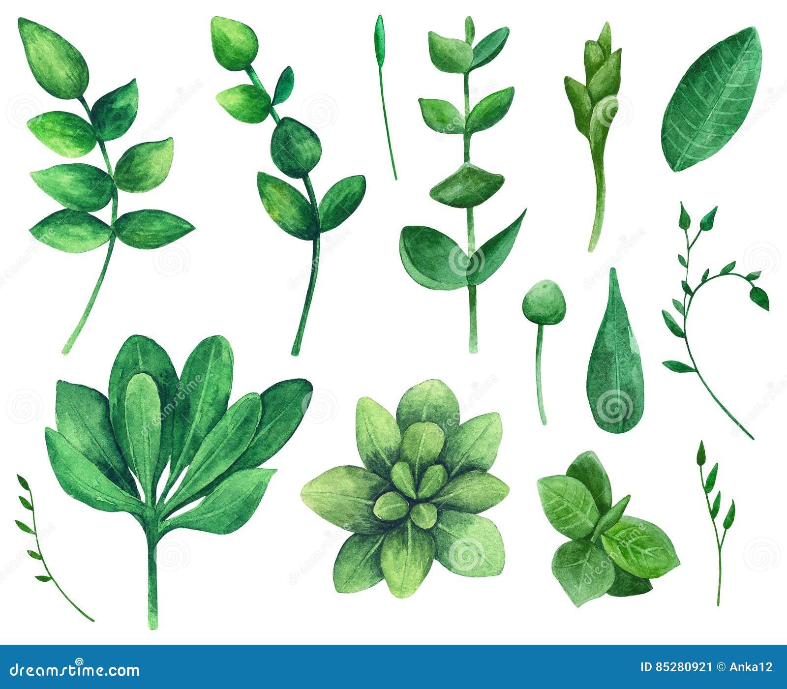 Watercolor nature clip art vector illustration for Watercolor greenery
