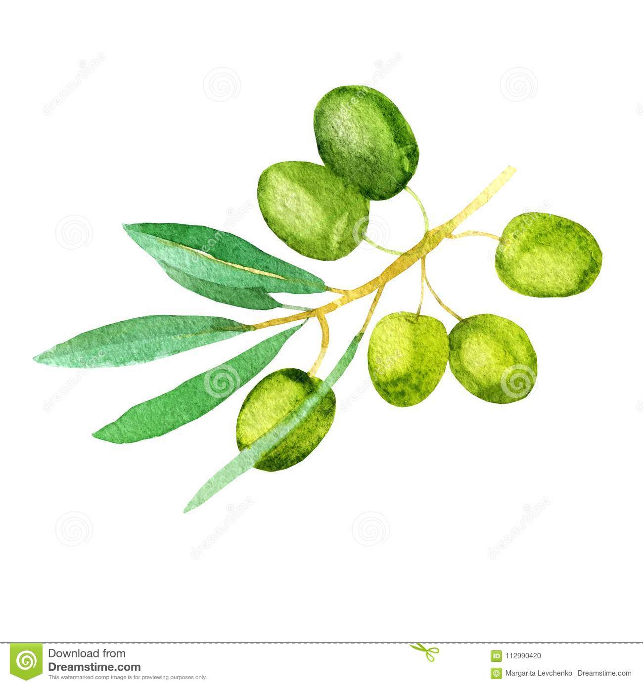Watercolor illustration. Image of olives.