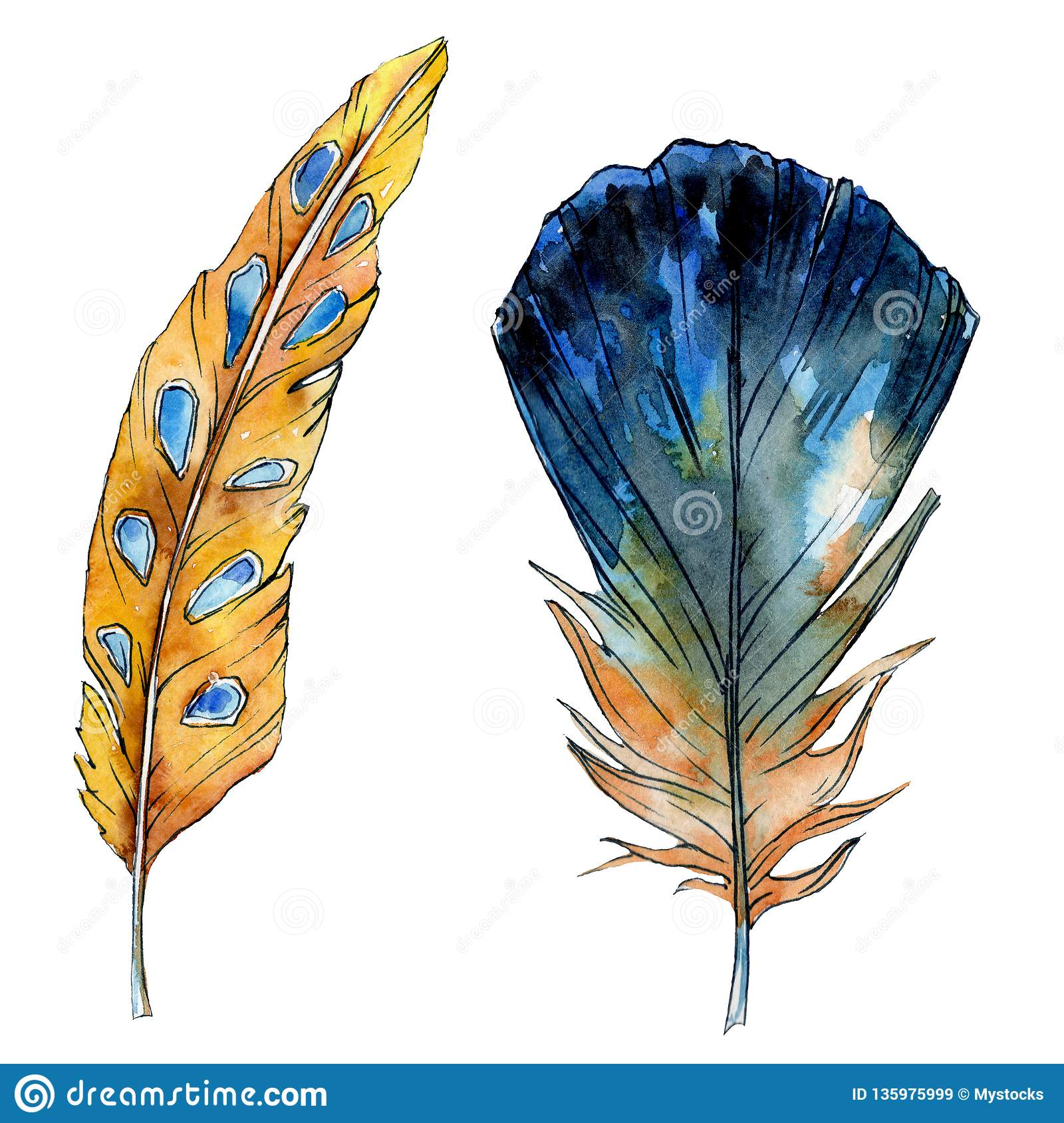 Watercolor Orange And Blue Bird Feather From Wing Isolated