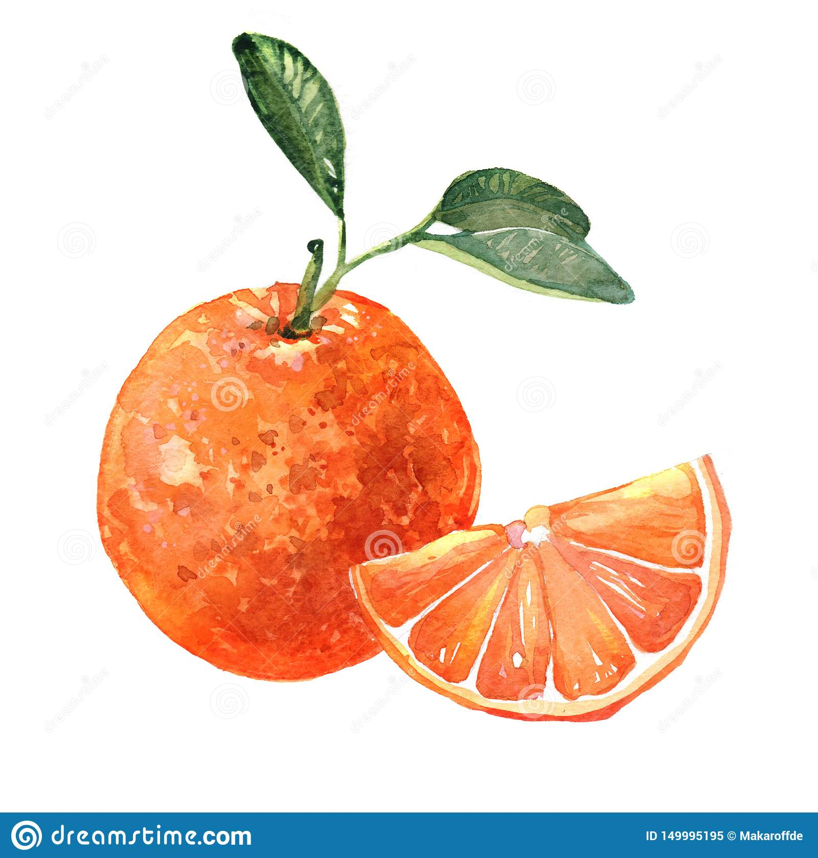 Watercolor orange fruit illustration isolated