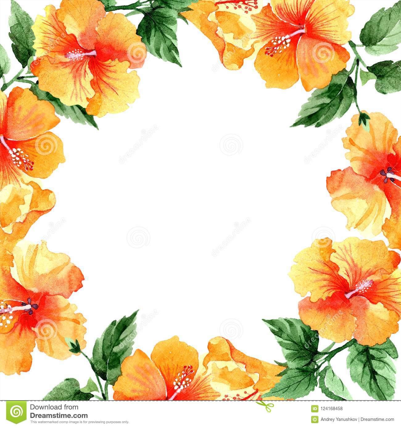 Watercolor Orange Naranja Hibiscus Flowers Floral Botanical Flower